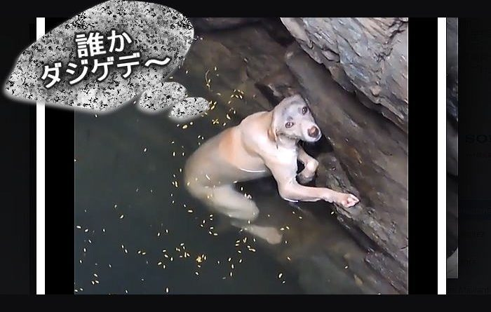 inu ido 700x445 - 井戸に落ちた犬を助けている動画2017