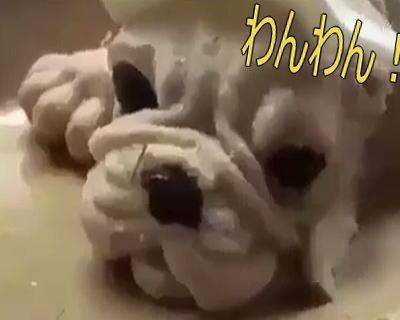 dogheadiscut - いぬの頭をサクッって うそーんって思ってるやつ